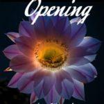 cereus-opening510